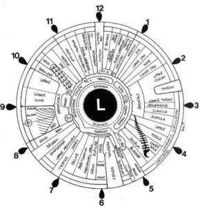 Iridology_iris_eye_chart_left_mirror