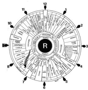 Iridology_iris_eye_chart_right_mirror