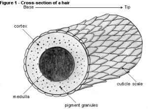 cs hair 2