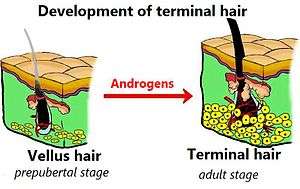 hair development